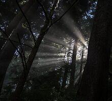 Shining Through by OffOn
