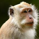 Indonesian Monkey by kaledyson