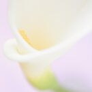 Sweet calla lily by dhmig