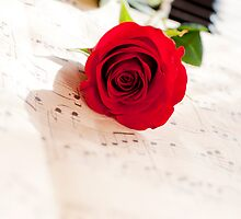 red rose by reich