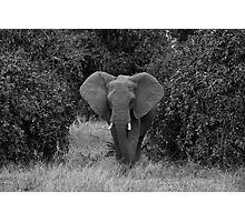 Afican Elephant Photographic Print