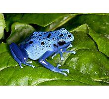Blue Dart Surprise Photographic Print