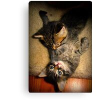 Two Beautiful Kittens Playing with Eachother Canvas Print