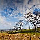 Two Trees - Humbleton, Northumbria National Park. by David Lewins