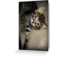 Blue Eyed Kitten Playing Greeting Card
