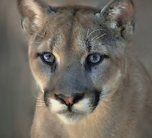 Cougar by Savannah Gibbs