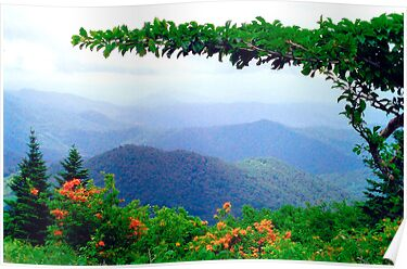Wild Azalea View by Annlynn Ward