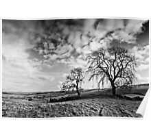 Two Trees - Black & White, Northumbria National Park. Poster
