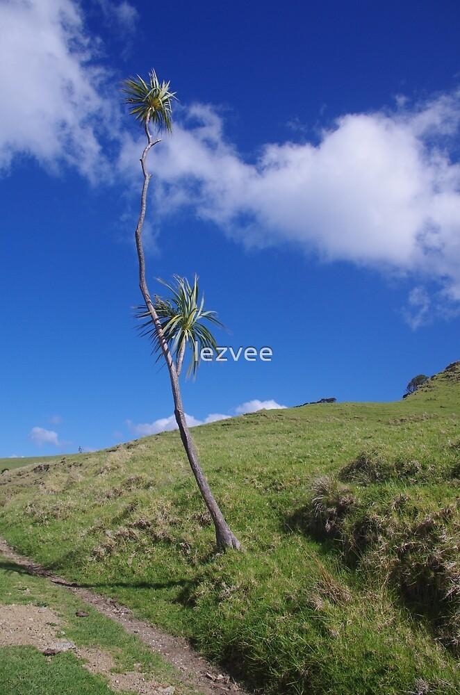 Lone Tree on Busby Head, Whangarei by lezvee