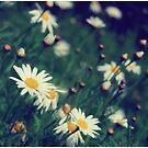 Signs of Spring by Jenn Ramirez