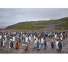 So where are the Penguins? Photographic Print