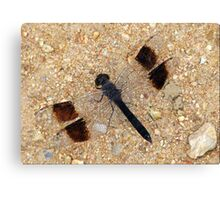 Banded Groundling Dragonfly Canvas Print