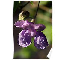 Purple Snail Vine Poster