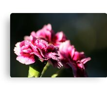 Capital One Carnations Canvas Print
