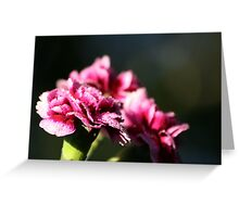 Capital One Carnations Greeting Card
