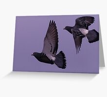 Rock Doves Greeting Card