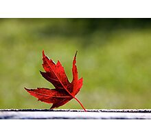 Oh Canada Photographic Print