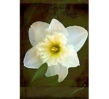 Springs Beauty © Photographic Print