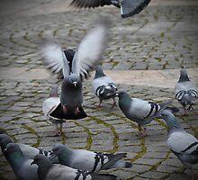 Crowd landing by Miodrag Konstantinov