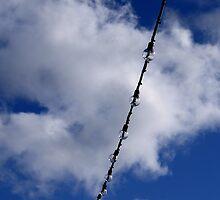Just hanging by davrberts