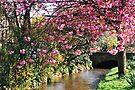 Springtime by WatscapePhoto