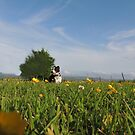 Dog Meadow Garden by mikequigley
