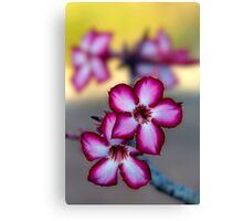 Colour Of Life XXXIX (Impala Lily) Canvas Print