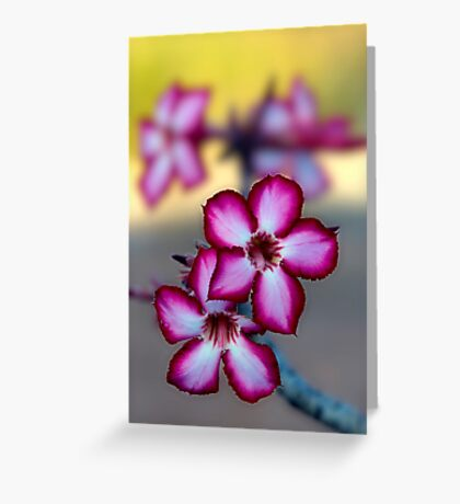Colour Of Life XXXIX (Impala Lily) Greeting Card