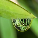 Water Droplet by GailD