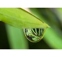 Water Droplet Photographic Print