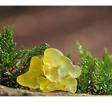 Yellow Brain Fungus Photographic Print