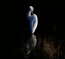 Giant Egret Evening Light Reflections by Deborah  Benoit