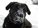 Nothing Like A Big Ol' Frosty Mug!!!!!!!! by NatureGreeting Cards ©ccwri