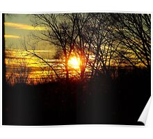 Beautyful Sunset Behind Trees Poster
