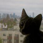 Cat in Window  by Rae Breaux