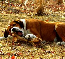 Giv'a Dog A Bone?  Now THATS What Ya Call A Bone!!! by NatureGreeting Cards ©ccwri