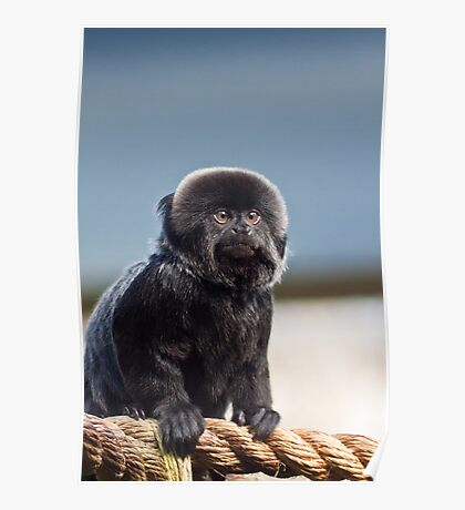 They Say Im a Little Monkey (Goeldis Monkey) Poster