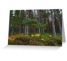 Glenmore Forest Park Aviemore Scotland UK Greeting Card