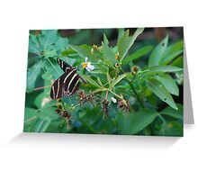 Zebra longwing on Spanish Needles Greeting Card