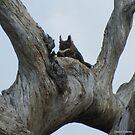 OWL in LOUISIANA by Debbie Robbins