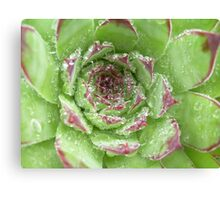 Dew crown Canvas Print