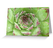 Dew crown Greeting Card
