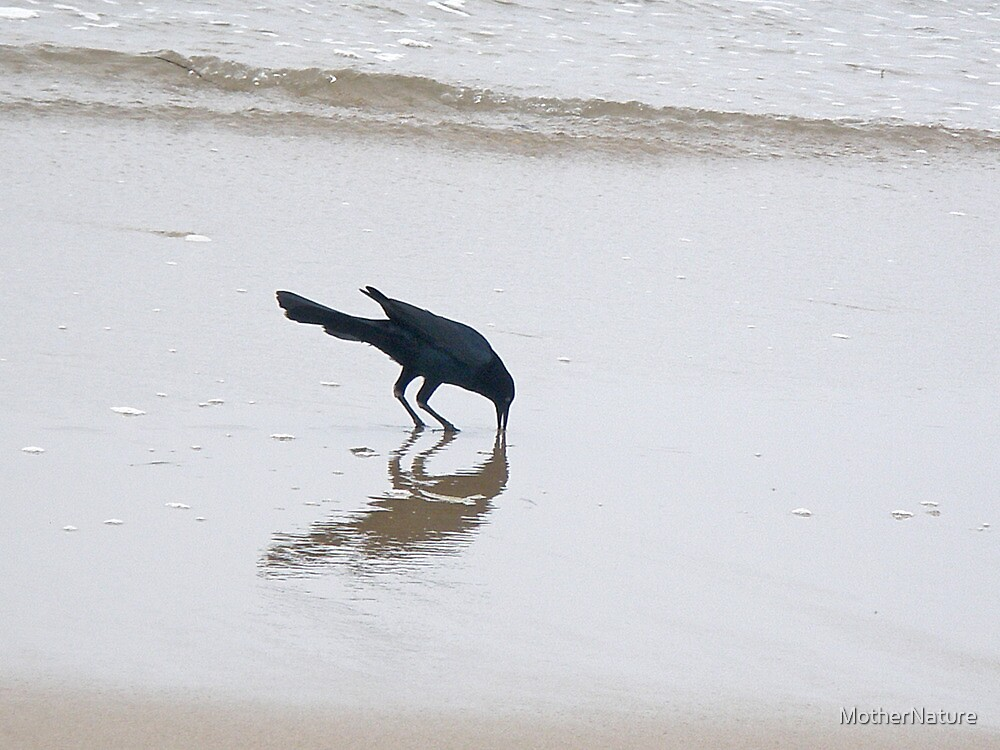Boat-Tailed Grackle in Surf by MotherNature