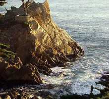 The Lone Cypress Tree by Cleber Photography Design