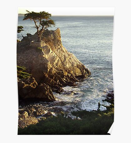 The Lone Cypress Tree Poster