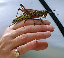 Lubber grasshopper and friend by Ben Waggoner
