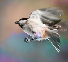 Chickadee Seed by Nazareth