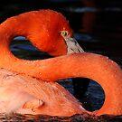 Flamingo S by Joe Jennelle