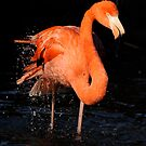 Flamingo Shaking by Joe Jennelle