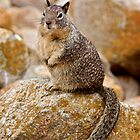 A Squirrel and His Rock by Peter Klemek